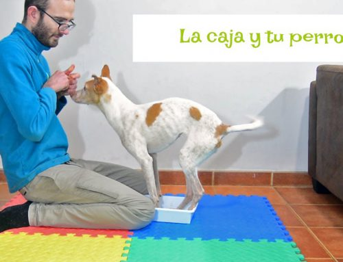 Tu perro y una caja ¿Qué hacemos?