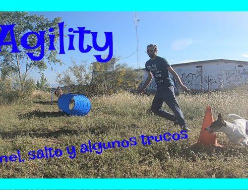 Agility. Disfruta junto tu perro