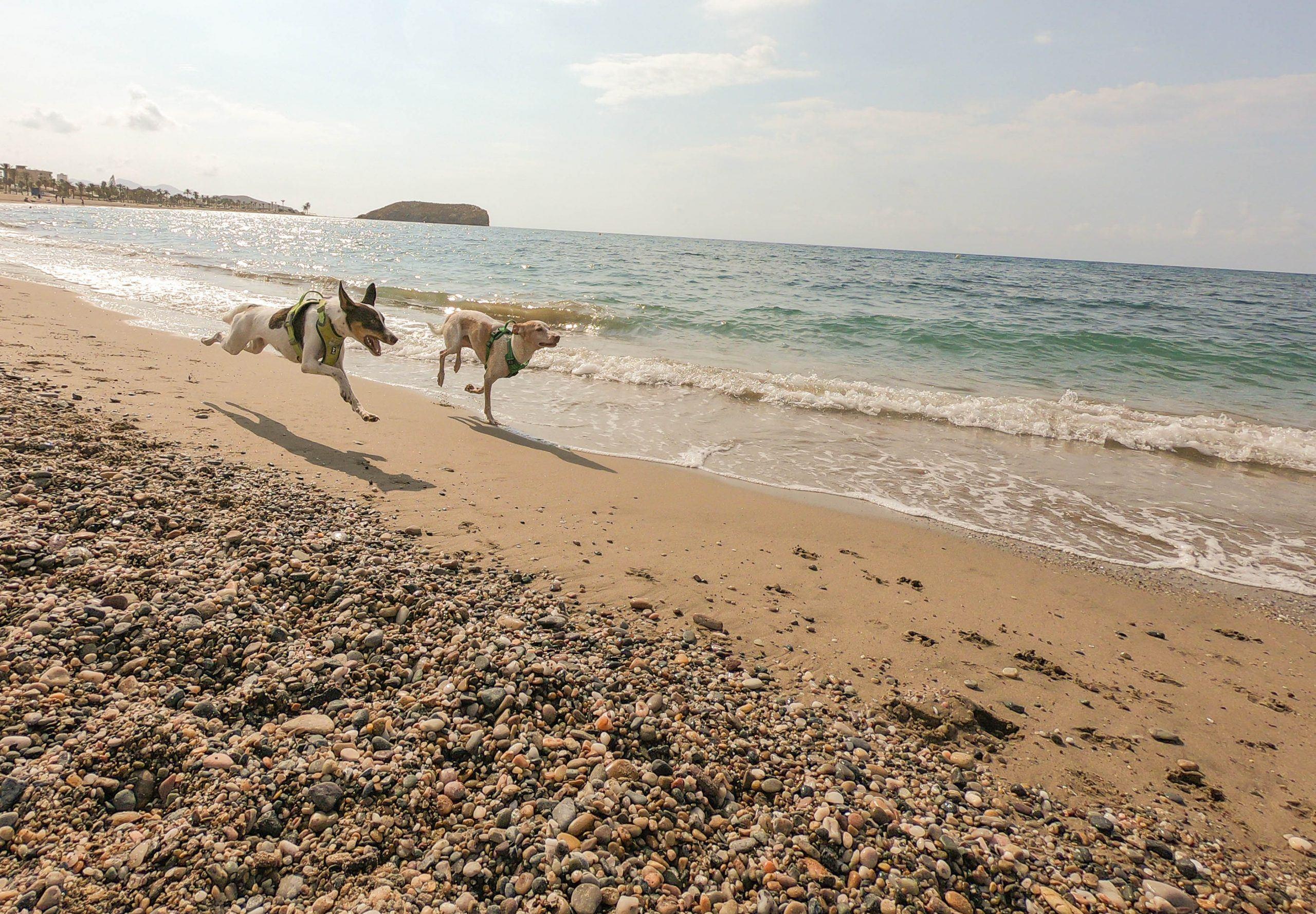 consejos para playas caninas